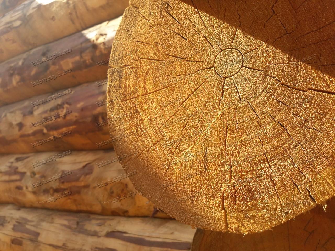Дарим скидки на срубы из зимнего леса диаметром 33-39 см!
